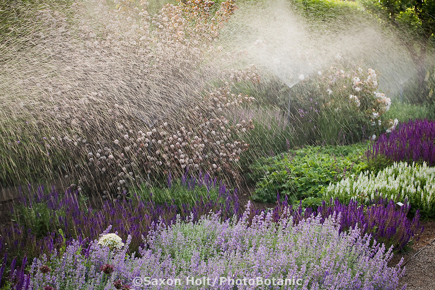 Watering flower bed with pop-up spray irrigation