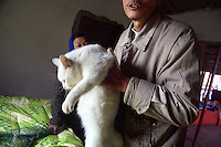 Volunteers inspect cats for signs of illness at Ha Wenjin's no-kill dog and cat rescue farm outside Nanjing, Jiangsu, China.