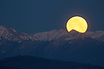 2017 Wolf Full Moonset Over Olympics Mountains