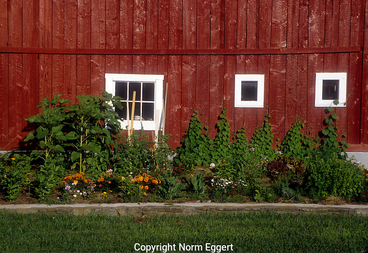 Red Barn and a Garden in Grafton, Vermont