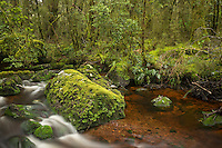 Rainforest stream near Milford Sound, Fiordland National Park, Southland, World Heritage Area, New Zealand