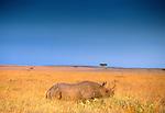 Black rhinoceros (Diceros bicornis), Masai Mara National Reserve, Kenya<br /> Canon EOS-3<br /> Canon EF 70-200mm lens<br /> September 2003