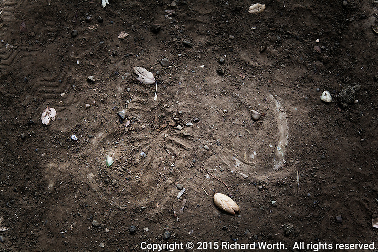 Evidence of man and horse in the trail dust.  A sneaker and a horseshoe - tracks on the trail.