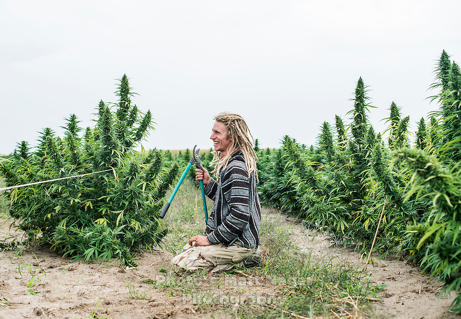 how to start a marijuana farm in colorado