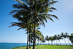 Coconut palms at Rex Smeal Park.  Port Douglas, Queensland, Australia