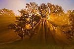 Sun beams passing through misty trees, Montezuma National Wildlife Refuge, New York, USA