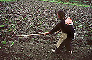 October 1984. The ancestral agricultural methods are still used in the province of Si Chuan, in the Guanghan region.