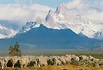Gaucho herding sheep, Patagonia, Argentina