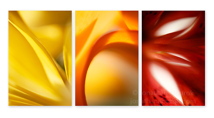 Close-up photographic triptych of lily flowers. Images 271, 274 and 275.