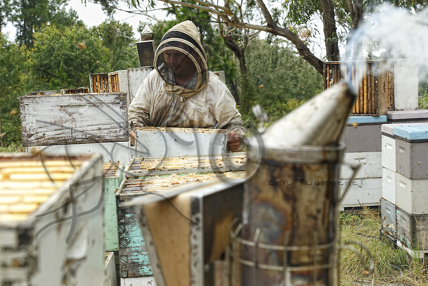 At the apiary during a harvest.///Sur le rucher pendant une récolte.