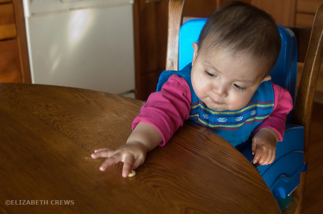 Berkeley CA Eight-month-old Guatemalan baby girl using pincer grasp to pick up cheerio  MR