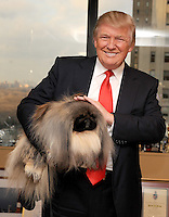 "Malachy ""the magnificent"" Best in Show prize winner from the Westminster Kennel Club Dog Show, meets Donald Trump with co-owner and handler David Fitzpatrick. February 15, 2012. © mpi01/MediaPunch Inc."