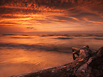 Beautiful dramatic sunset nature scenery of driftwood on a shore of lake Huron. Ontario, Canada, Pinery Provincial Park.