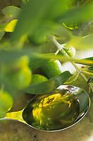 """EIl Bacco Felicope/Italie/Ombrie/Foligno: Huile d'Olives vertes de l'Ombrie au restaurant bar à vin """"Il Bacco Felice"""""""