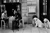 Switzerland. Canton Ticino. Lugano. Piazza Riforma. Town center. Two men talk seated on stools on an open outdoor terrace. Two dogs on leash await their owners. 12.06.2016  © 2016 Didier Ruef