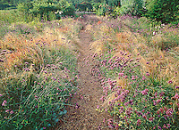 Path thru Garden, Mattituck, archival gicle&eacute; canvas framed, edition of 6 $2500
