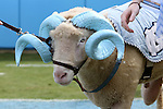 19 September 2015: Rameses the Ram, Carolina's mascot. The University of North Carolina Tar Heels hosted the University of Illinois Fighting Illini at Kenan Memorial Stadium in Chapel Hill, North Carolina in a 2015 NCAA Division I College Football game. UNC won the game 48-14.