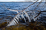 Ice forming near the shore of Lake Mendota off of Governor Nelson State Park near Madison, Wisconsin.