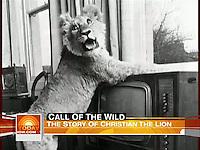 18/3/09 Christian the Lion