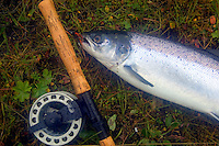 "Atlantic Salmon Catch and Release Fly Fishing in Iceland. 8 pound female caught on 1"" Snaelda in Litlifoss pool, Svalbardsa Thistilfjordur"