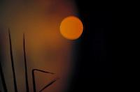 Sun, close up in nature scene