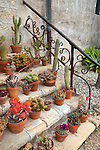Various cacti and succulents decorate the steps in the garden of Old Mission Santa Barbara, Santa Barbara, California, USA