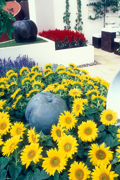 Dwarf Sunflower garden with apple ornaments