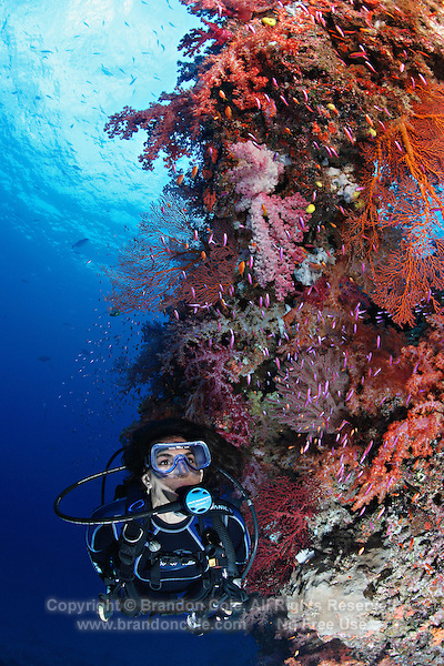 qe0781-D. scuba diver (model released) swims along healthy coral reef, on which multi-hued soft corals (Dendronephthya sp.), gorgonian sea fans (Melithaea sp.), and different species of anthias fish (Pseudanthias spp.) thrive. Fiji, tropical Pacific Ocean..Photo Copyright © Brandon Cole. All rights reserved worldwide.  www.brandoncole.com..This photo is NOT free. It is NOT in the public domain. This photo is a Copyrighted Work, registered with the US Copyright Office. .Rights to reproduction of photograph granted only upon payment in full of agreed upon licensing fee. Any use of this photo prior to such payment is an infringement of copyright and punishable by fines up to  $150,000 USD...Brandon Cole.MARINE PHOTOGRAPHY.http://www.brandoncole.com.email: brandoncole@msn.com.4917 N. Boeing Rd..Spokane Valley, WA  99206  USA.tel: 509-535-3489