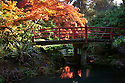 WA08906-00...WASHINGTON - Autumn color at Heart Bridge Kubota Garden in Seattle