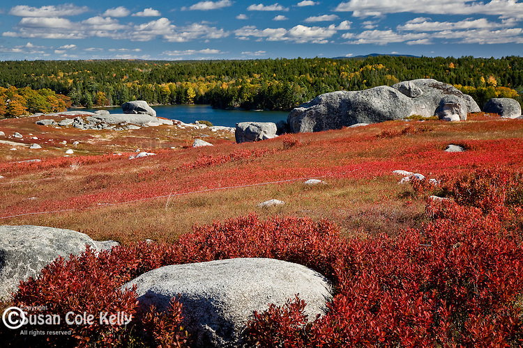 Autumn colors the blueberry fields in Blue Hill, Midcoast ME, USA