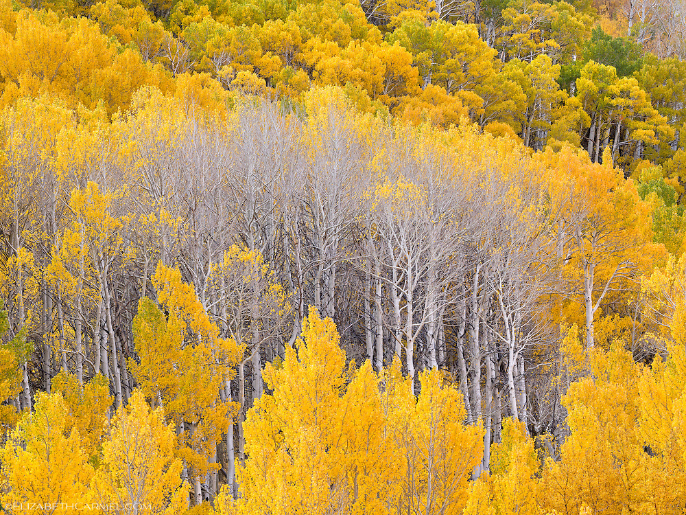 Autumn Transitions
