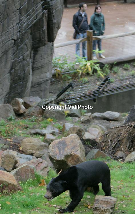 Foto: VidiPhoto..ARNHEM - De Maleisische beer (of honingbeer) Frodo is als dier de grootste publiekstrekker van Burgers' Zoo in Arnhem.