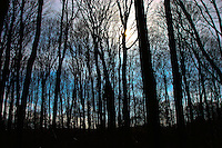 A stark forest is silhouetted against the sun and sky at dusk