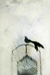Abstract Bird out of cage. Photo based illustration.