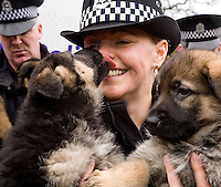 16/3/09 Strathclyde Police Dogs