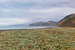 Expansive wide open beaches mark the Lost Coast and the King Range on the Northern California Pacific Coast.  Humboldt and Mendicino Counties.  A wild and scenic, roadless coastline near Humboldt Redwoods State Park via Mattoli Road over the King Range from U.S. 101.