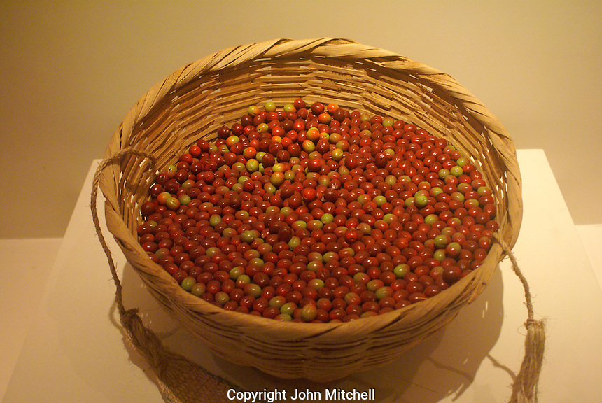 Basket filled with ripe coffee beans, Museo Nacional de Antropologia David J. Guzman in San Salvador, El Salvador