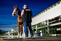 HALLANDALE BEACH, FL - JAN 27: California Chrome gets a bath at Gulfstream Park Race Course on January 27, 2017 in Hallandale Beach, Florida. (Photo by Scott Serio/Eclipse Sportswire/Getty Images)