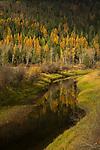 Golden tamarack trees reflecting onto Myrtle Creek at the Kootenai National Wildlife Refuge