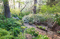 Small, secluded patio of stepping stones with rustic bent wood chairs, surrounded by flowering Snow azaleas in morning light, spring woodland garden, Boninti Garden, Virginia