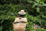 A comunidade Quilombola Arenheguaua situa-se a 54 quilômetros da cidade de Alcântara e possui aproximadamente 80 famílias.  A comunidade já é certificada pela fundação Palmares como quilombola e atualmente (março de 2015) o processo de titulação encontra-se em andamento. A comunidade não está na região que foi tomada pela Base Espacial de Lançamento.