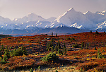 Fall landscape, Alaska Range, Denali National Park, Alaska