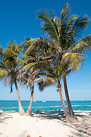Two palm-trees on empty Zachary Taylor Beach, Key West, Florida