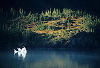 Floating ice berg, Harriman fjord, Prince William Sound, Alaska