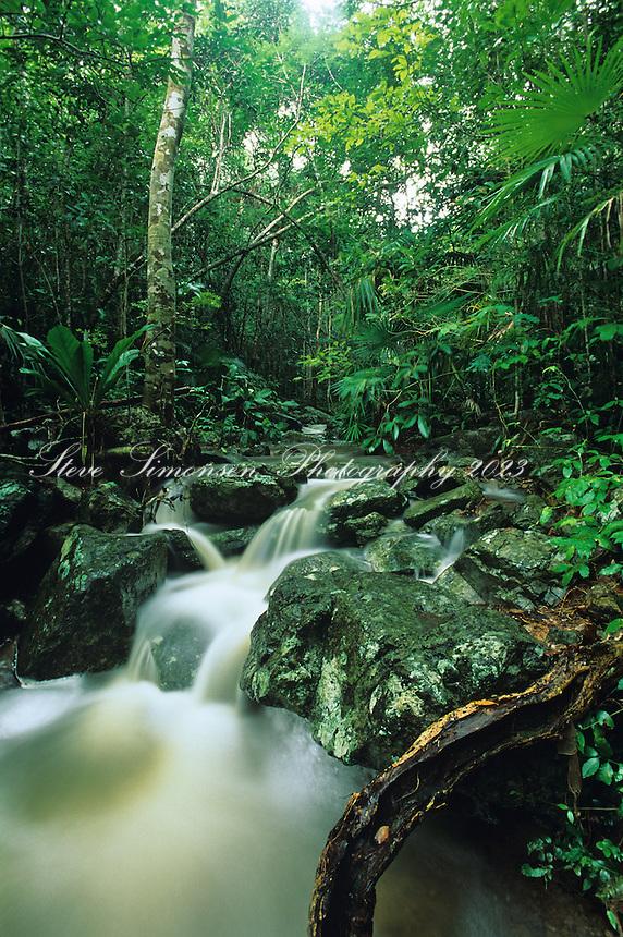 Reef Bay Gut<br /> Virgin Islands National Park<br /> St. John, US Virgin Islands