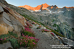 Alpenglow and wildflowers on the Great Western Divide: approaching Kaweah Gap on the High Sierra Trail.