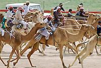 Camel Race, Abu Dhabi, Gulf States
