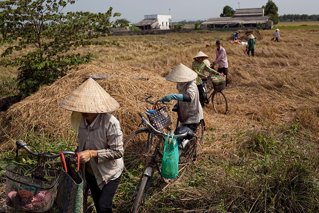 Vietnamese women take a lunch break from harvesting rice in Ho Chi Minh City, Vietnam...Kevin German / LUCEO