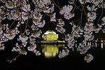 Cherry blossoms frame the Jefferson Memorial.