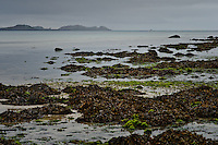 Seawweed covered rocks on the shore of the island of Tresco with the island of Sampson in the distance.